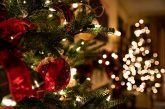 Prince Landscape to Offer the Finest Christmas Trees at a Reasonable Price